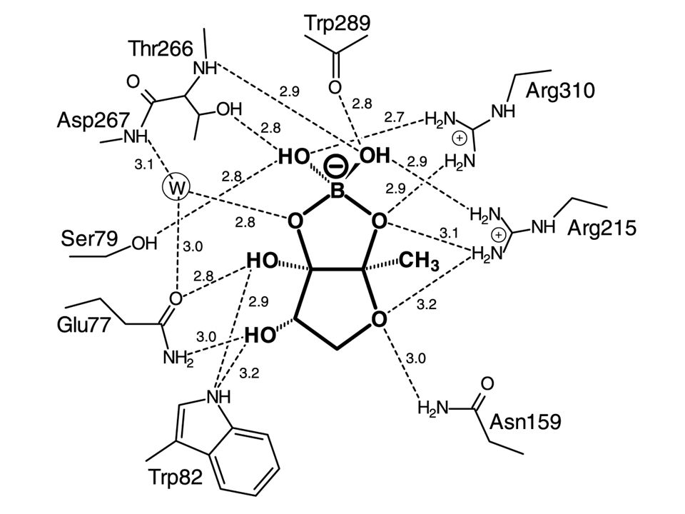 The V Fischeri Autoinducer N B Ketocaproyl L Homoserine Lactone
