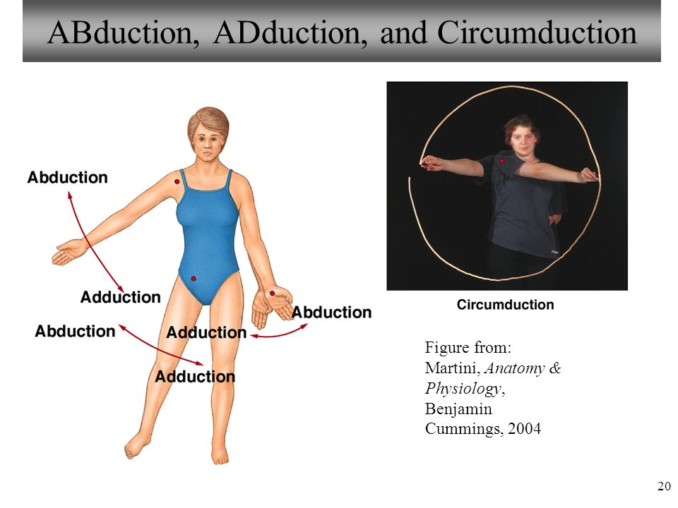 1 Chapter 8 Articulations Lecture 15 Visual Anatomy & Physiology ...