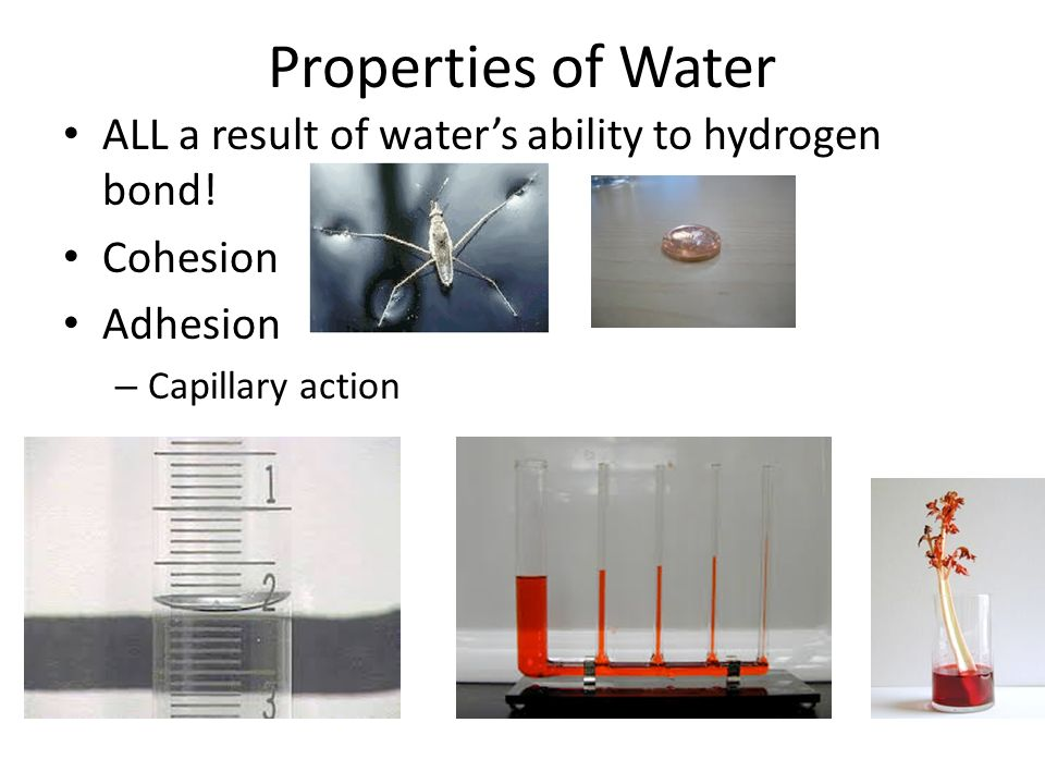 Properties of Water ALL a result of water's ability to hydrogen bond.