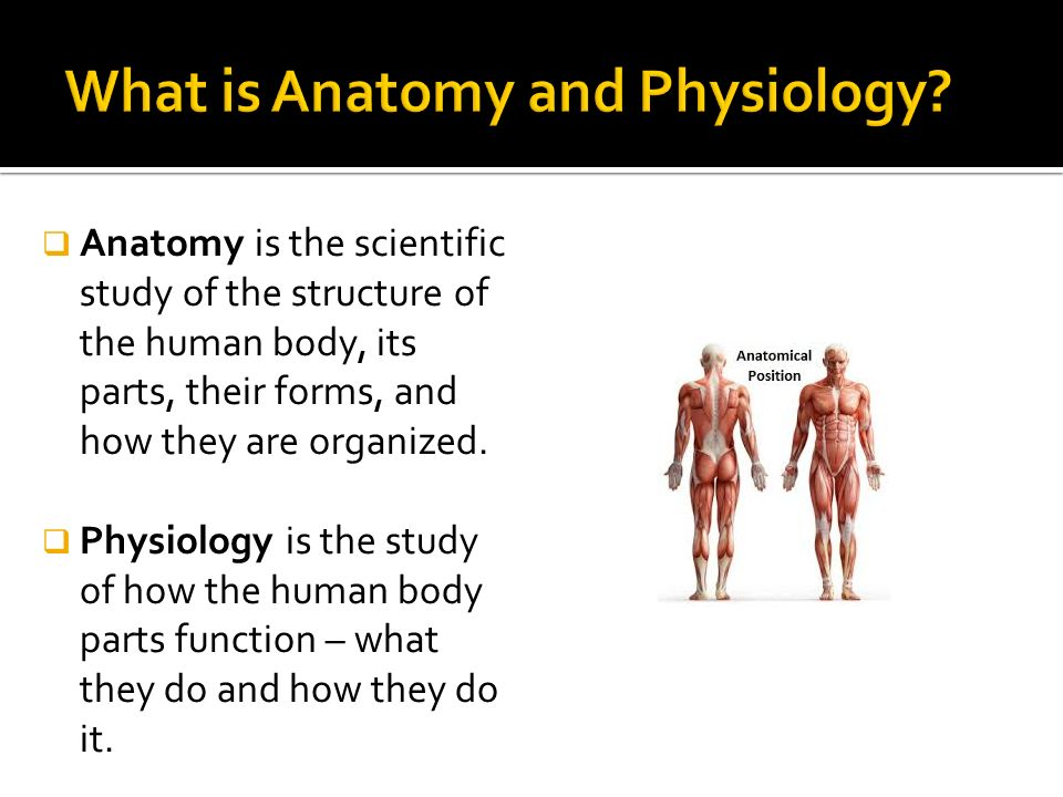 What is Anatomy and Physiology???.  Anatomy is the scientific ...