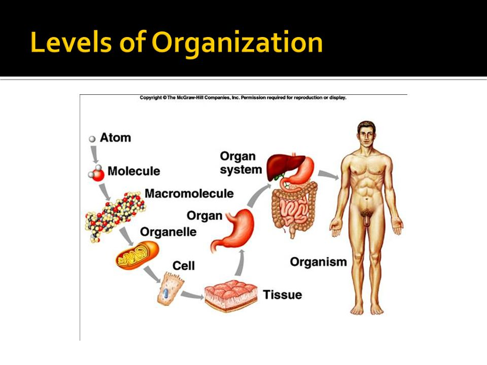 What Is Anatomy And Physiology Anatomy Is The Scientific