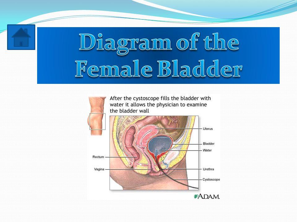 By Harry Russell Ryan Clahan Diagram Of Female Bladder Diagram Of