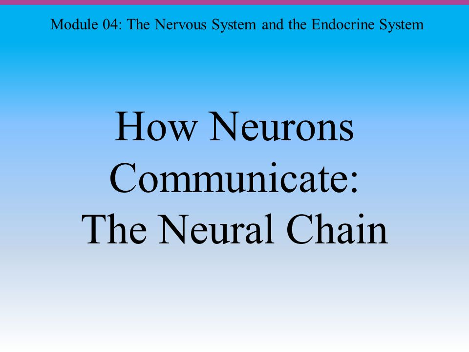 How Neurons Communicate: The Neural Chain Module 04: The Nervous System and the Endocrine System