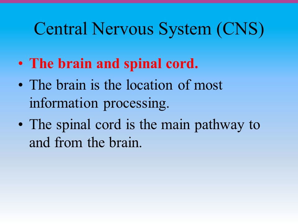 Central Nervous System (CNS) The brain and spinal cord.