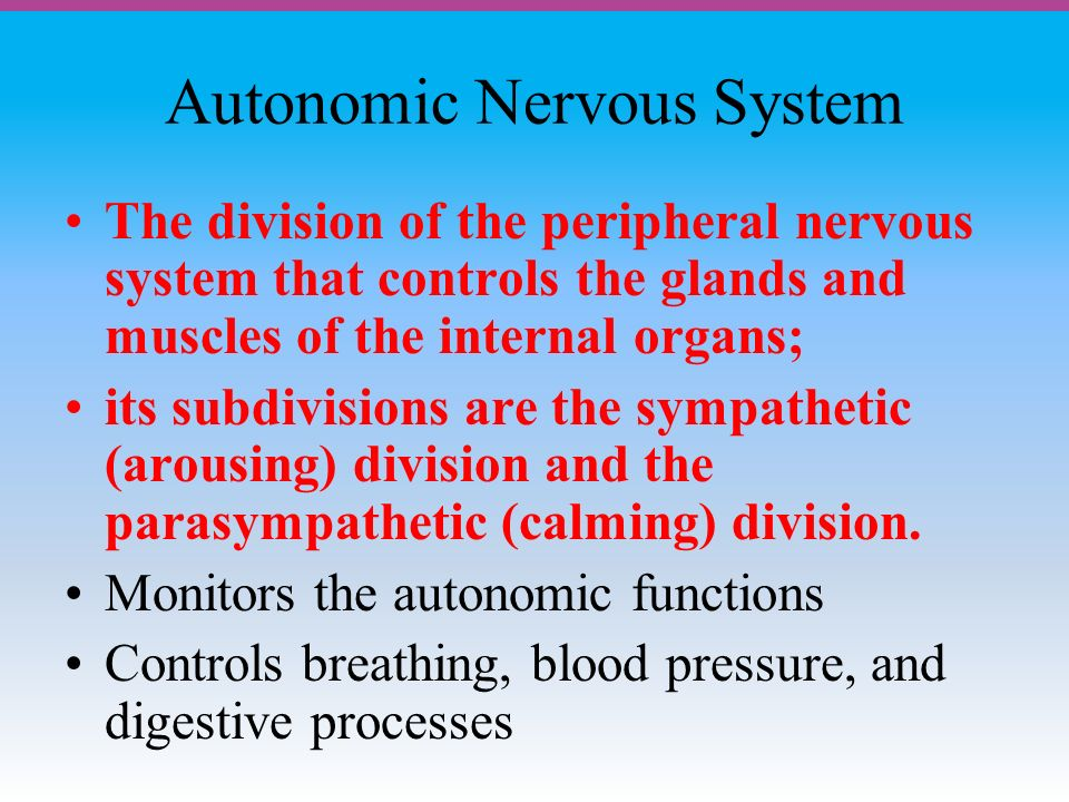Autonomic Nervous System The division of the peripheral nervous system that controls the glands and muscles of the internal organs; its subdivisions are the sympathetic (arousing) division and the parasympathetic (calming) division.
