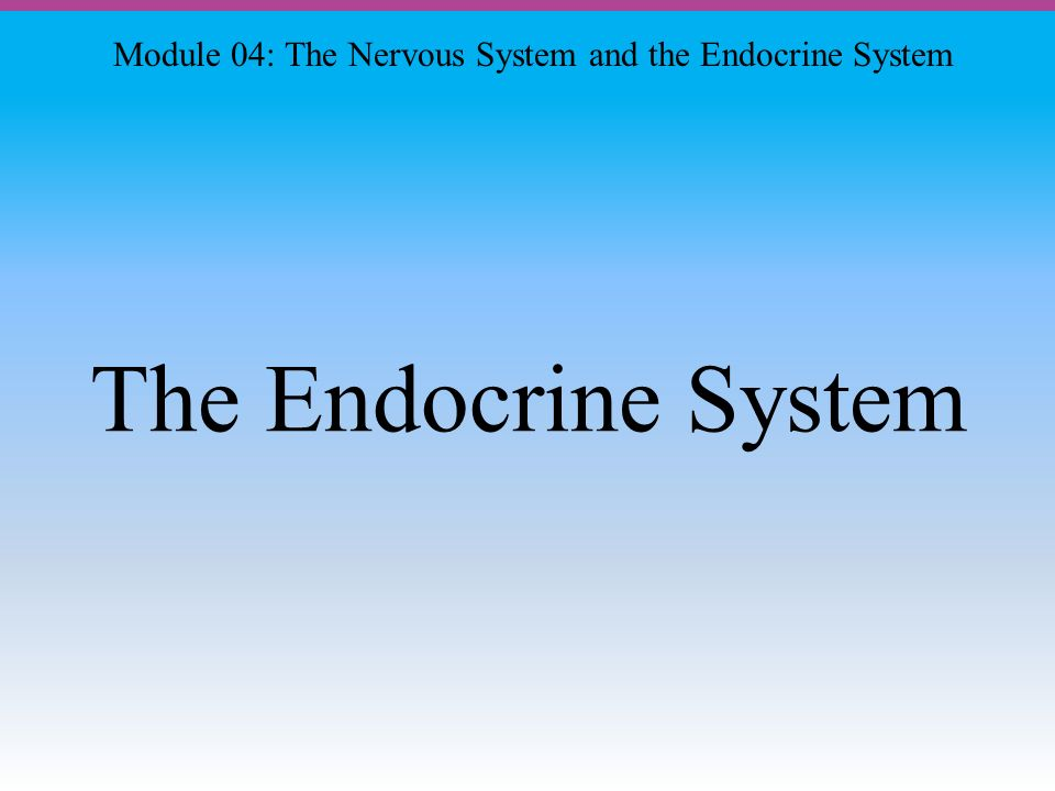 The Endocrine System Module 04: The Nervous System and the Endocrine System