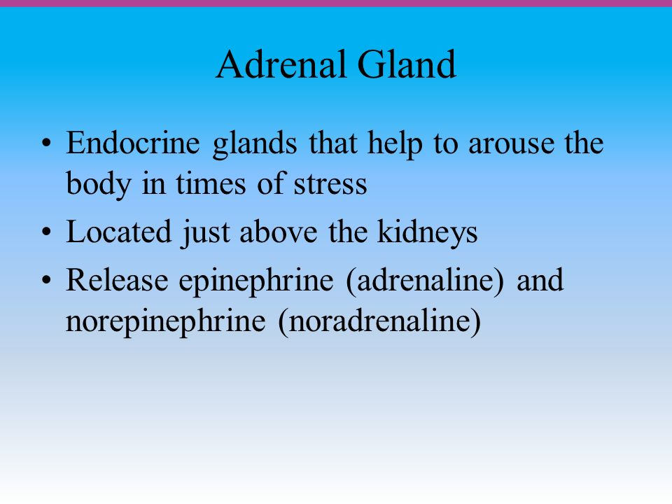 Adrenal Gland Endocrine glands that help to arouse the body in times of stress Located just above the kidneys Release epinephrine (adrenaline) and norepinephrine (noradrenaline)