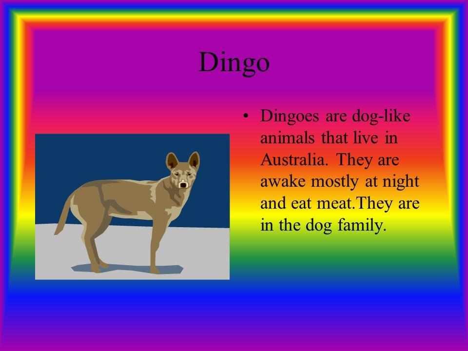 Australia  Kangaroo Kangaroos hop around and have pouches