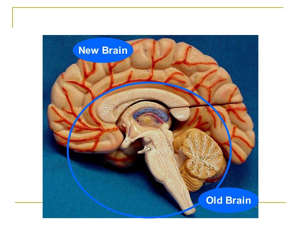 Module 7 The Brain Chapter 2 Essentials of Understanding Psychology ...