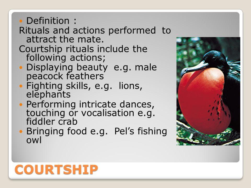 Definition courtship