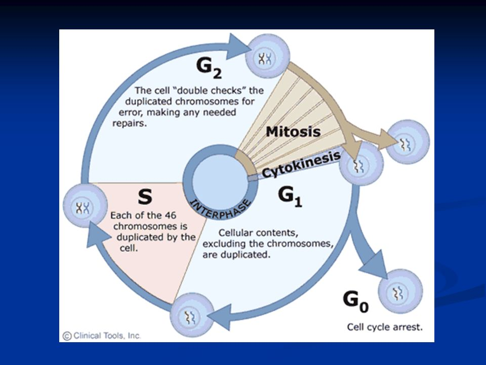 Mitotic cell division is considered asexual because