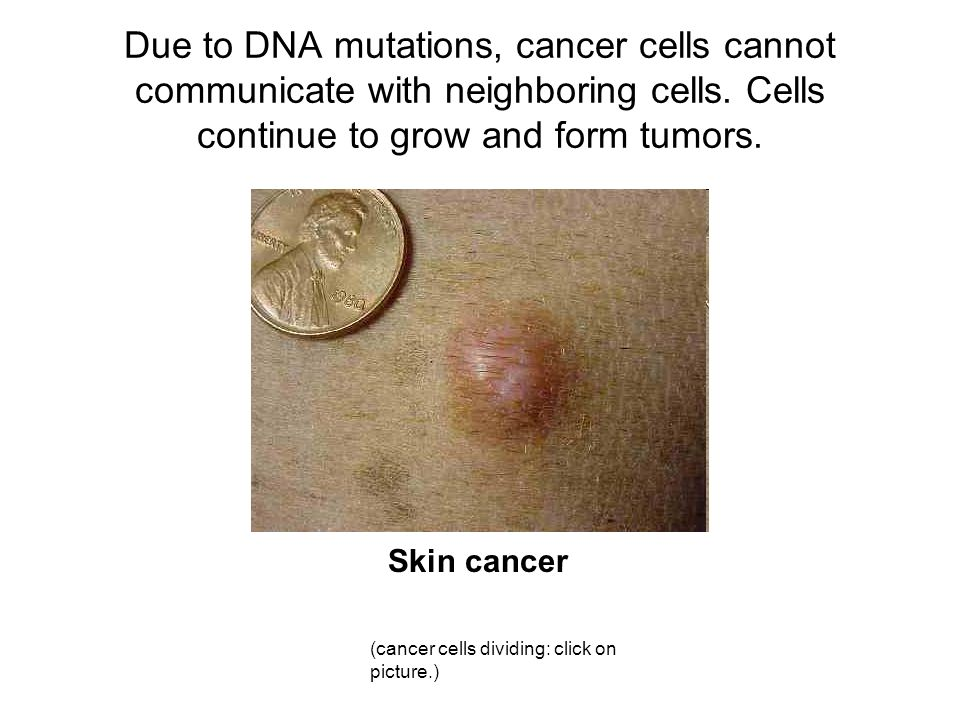 Due to DNA mutations, cancer cells cannot communicate with neighboring cells.