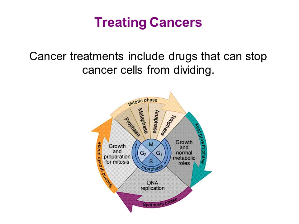 Treating Cancers Cancer treatments include drugs that can stop cancer cells from dividing.