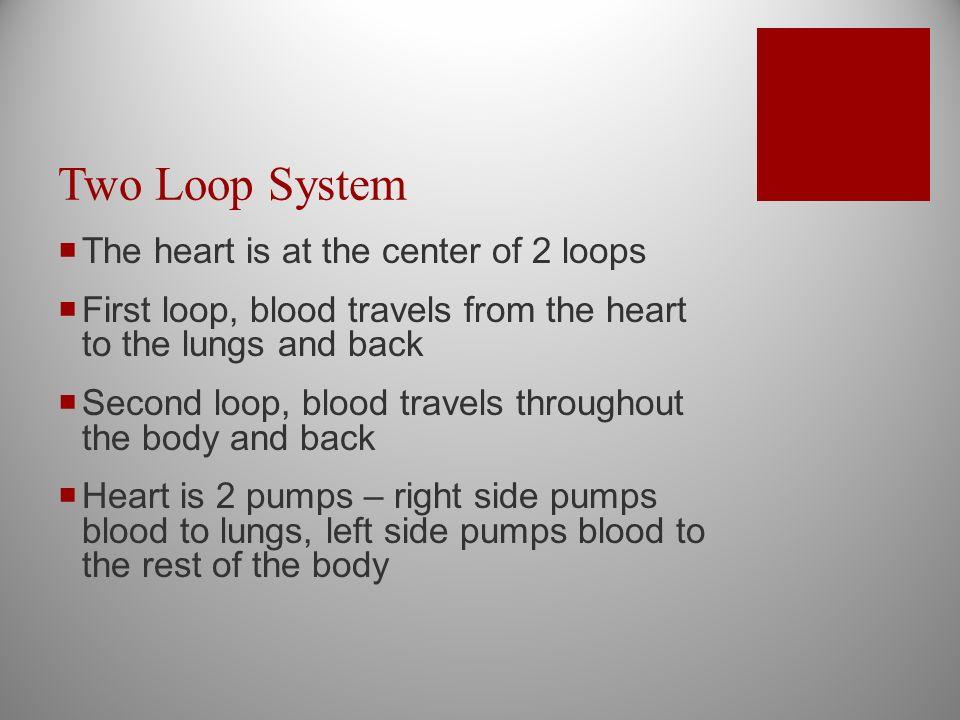 Cardiovascular System & the Heart  The Cardiovascular System