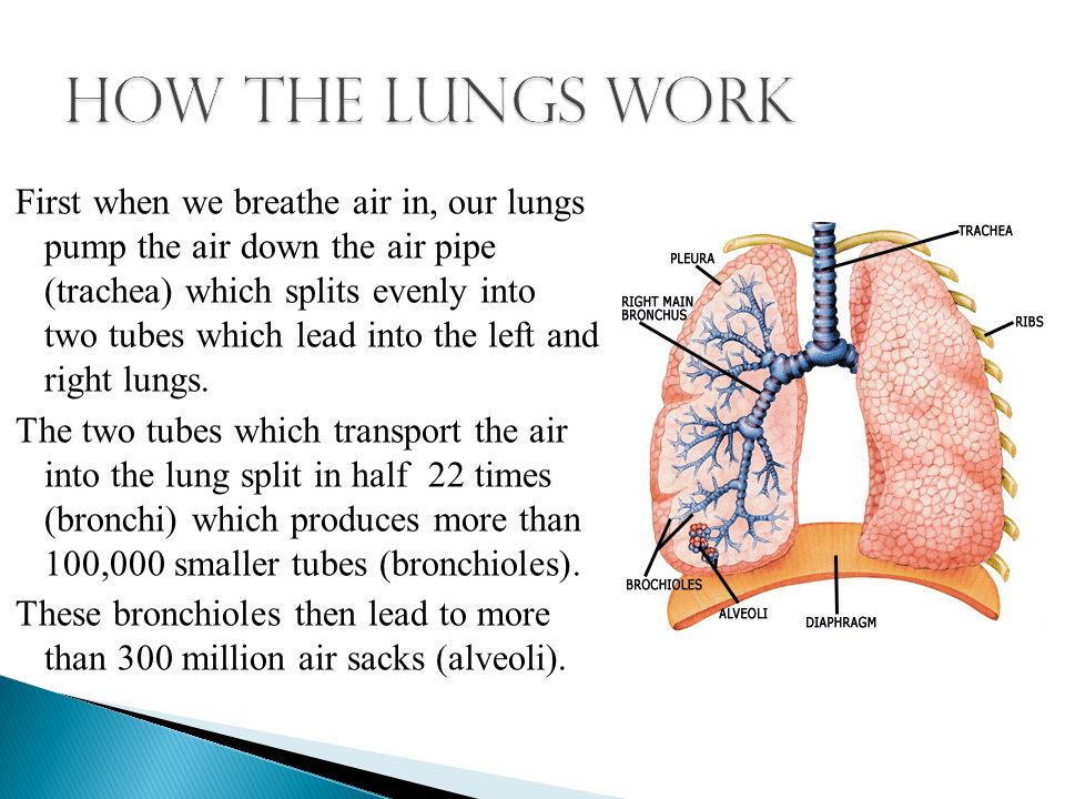 Your Lungs Are One Of The Most Important Organ In The Body And Are
