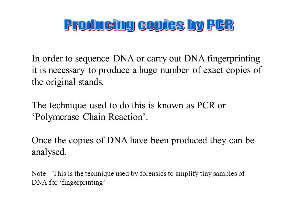 In order to sequence DNA or carry out DNA fingerprinting it is necessary to produce a huge number of exact copies of the original stands.