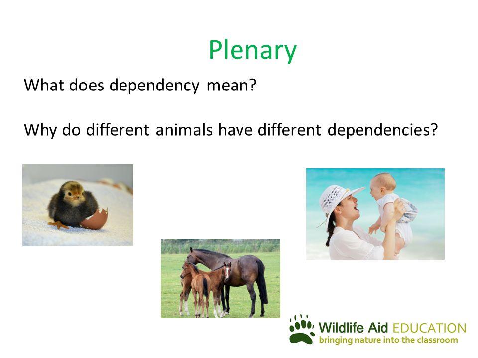 gestation period of different mammals
