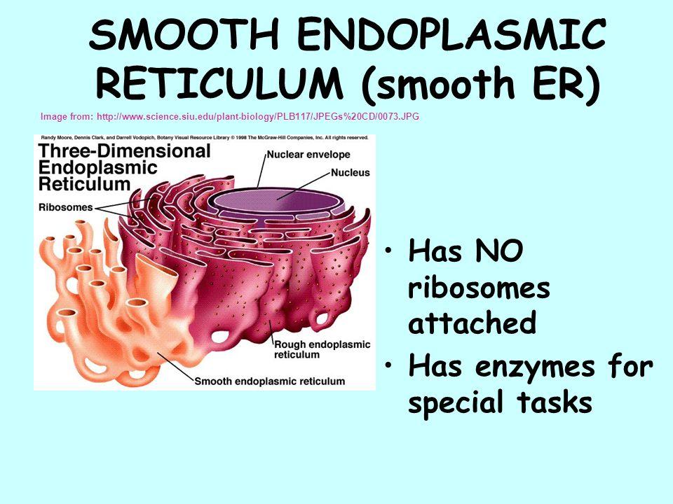 Smooth Endoplasmic Reticulum Diagram Smooth Endoplasmic Reticulum ...