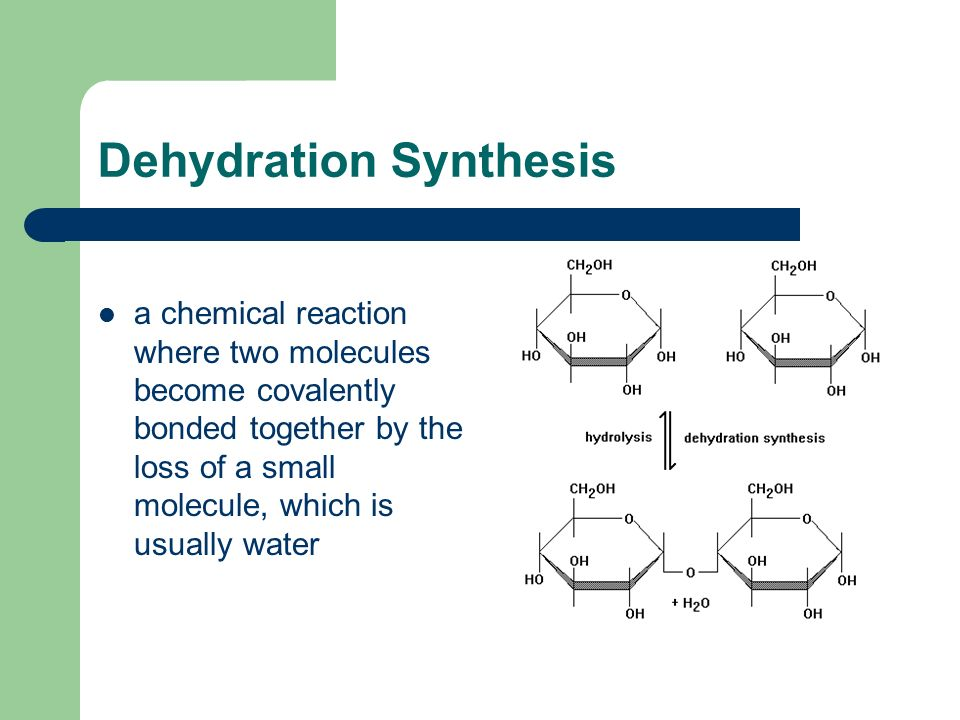 Dehydration Synthesis a chemical reaction where two molecules become covalently bonded together by the loss of a small molecule, which is usually water
