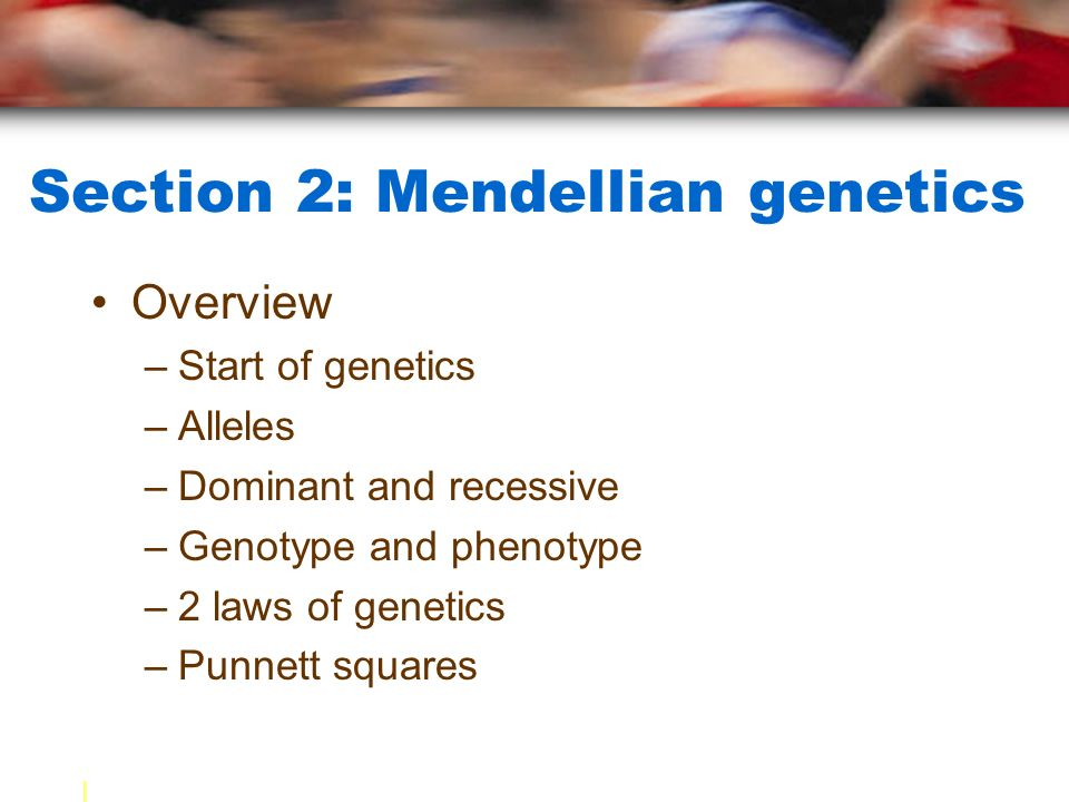 Section 2: Mendellian genetics Overview –Start of genetics –Alleles –Dominant and recessive –Genotype and phenotype –2 laws of genetics –Punnett squares