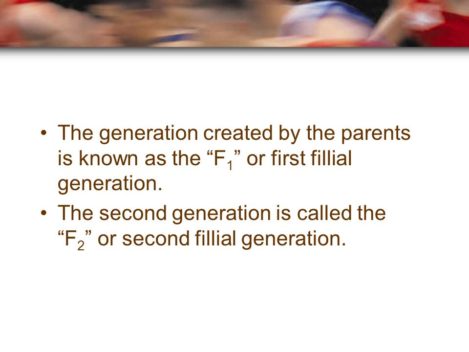 The generation created by the parents is known as the F 1 or first fillial generation.