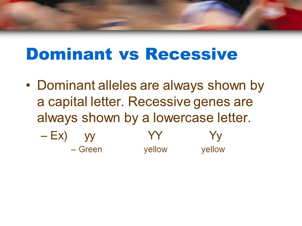 Dominant vs Recessive Dominant alleles are always shown by a capital letter.