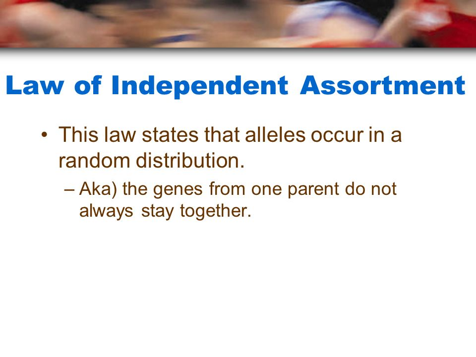 Law of Independent Assortment This law states that alleles occur in a random distribution.
