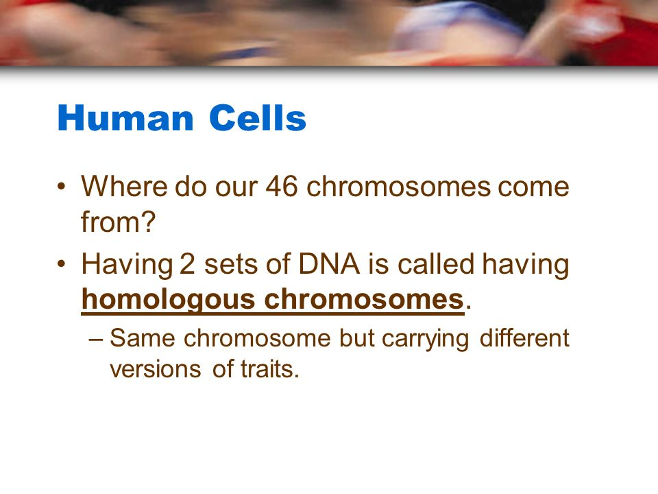 Human Cells Where do our 46 chromosomes come from.