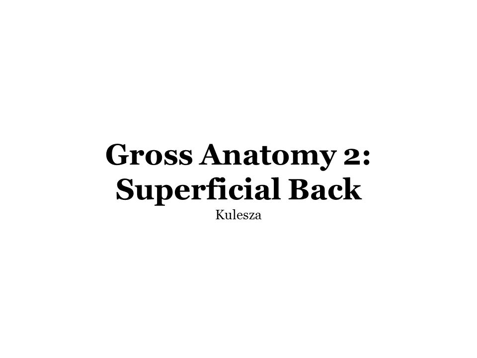 Gross Anatomy 2 Superficial Back Kulesza Readings Snell Clinical