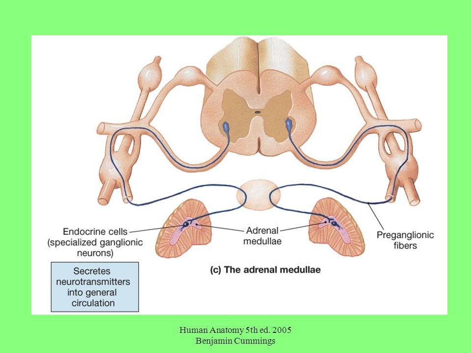 Human Anatomy 5th ed Benjamin Cummings General Anatomy of the ...