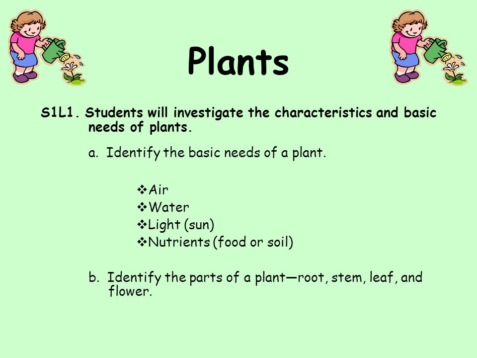 Table of Contents Georgia Performance Standard Basic needs of plants -air -water -light -soil (food) Parts of a plant -roots -stem -leaf -flower Life cycle of a plant Pie and bar graph Children's books