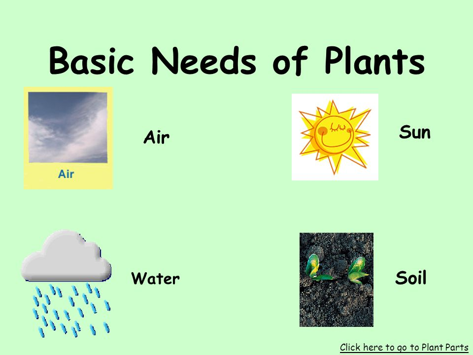 Plants S1L1. Students will investigate the characteristics and basic needs of plants.