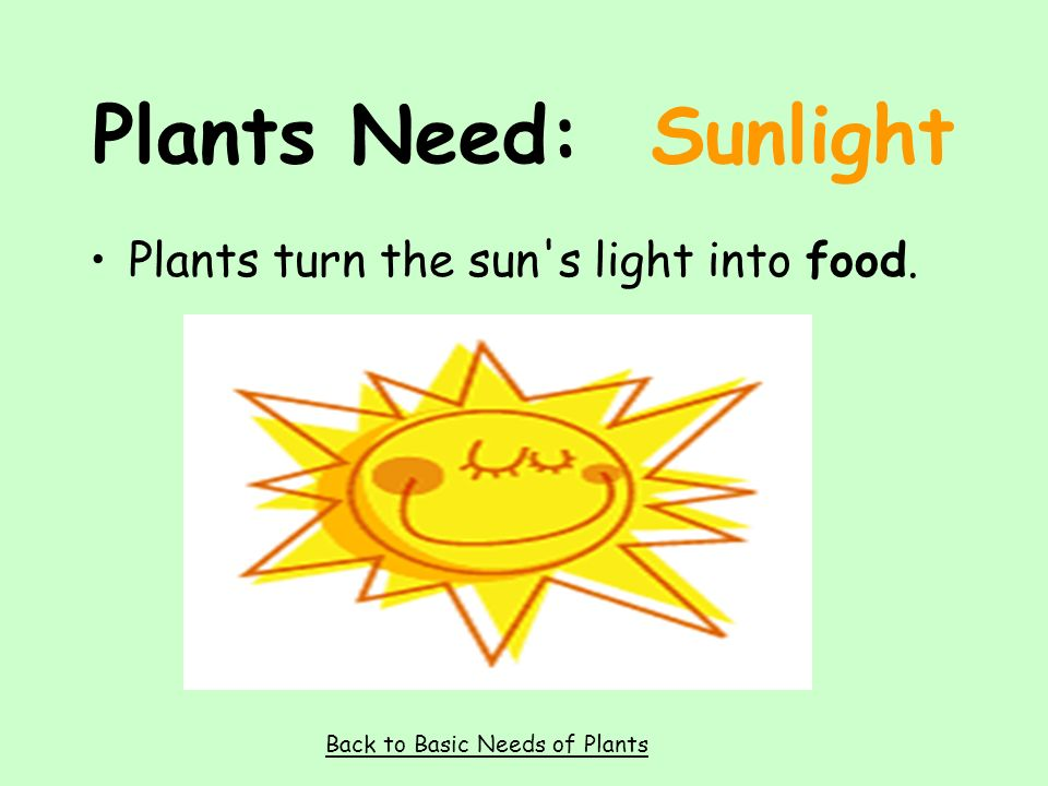 Plants Need: Air Plants use air to make their food. Back to Basic Needs of Plants