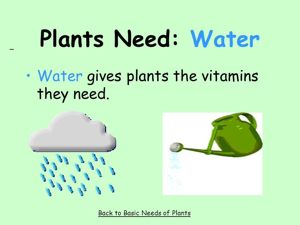 Plants Need: Sunlight Plants turn the sun s light into food. Back to Basic Needs of Plants