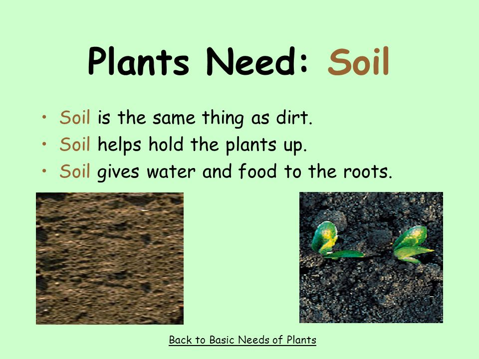 Plants Need: Water Water gives plants the vitamins they need. Back to Basic Needs of Plants