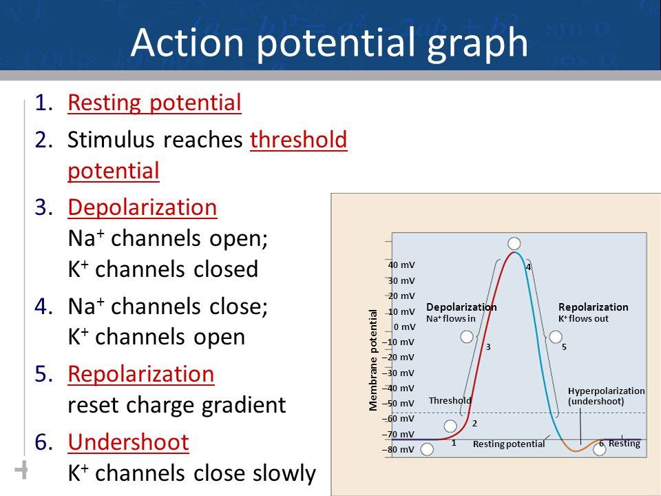 Figure 48.11a Action potential Threshold Resting potential Time Membrane potential (mV)  50  100 