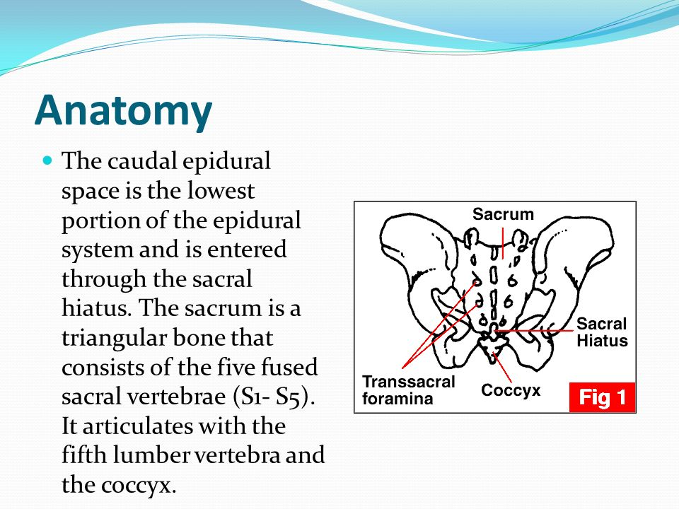 Dr. Rupak Bhattarai. Introduction Caudal anaesthesia has been used ...