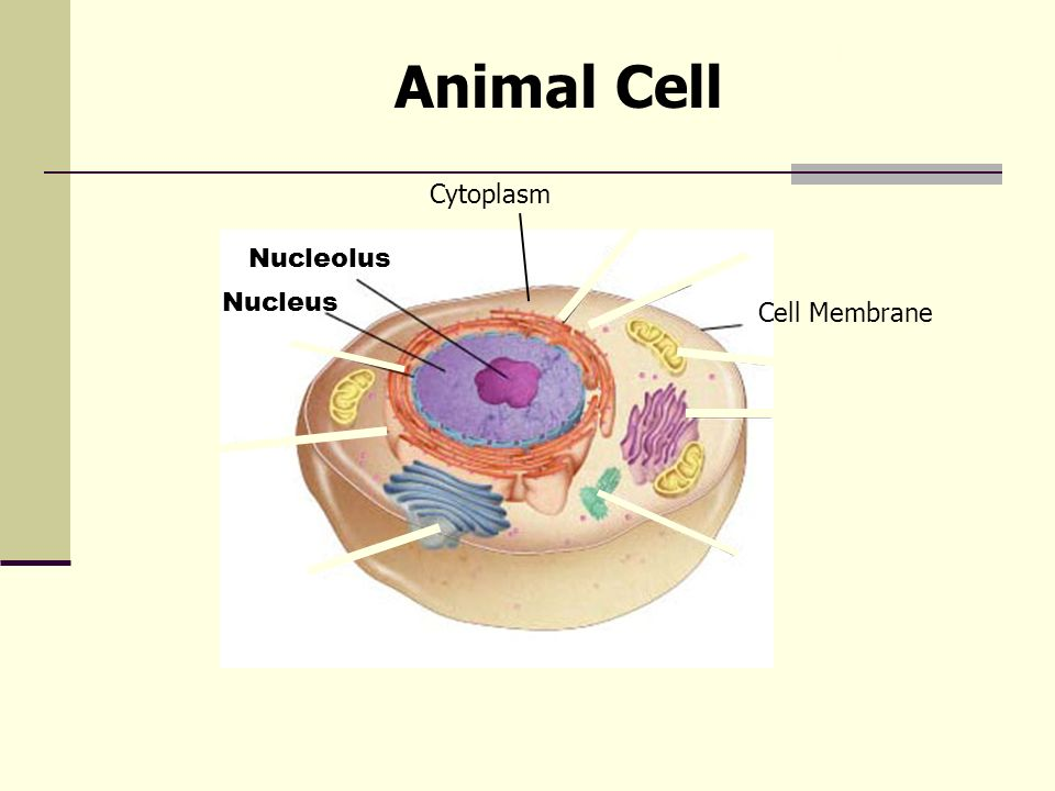Cell Structure And Function Section 2 Review