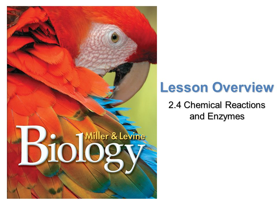 Lesson Overview Lesson Overview Chemical Reactions and Enzymes Lesson Overview 2.4 Chemical Reactions and Enzymes