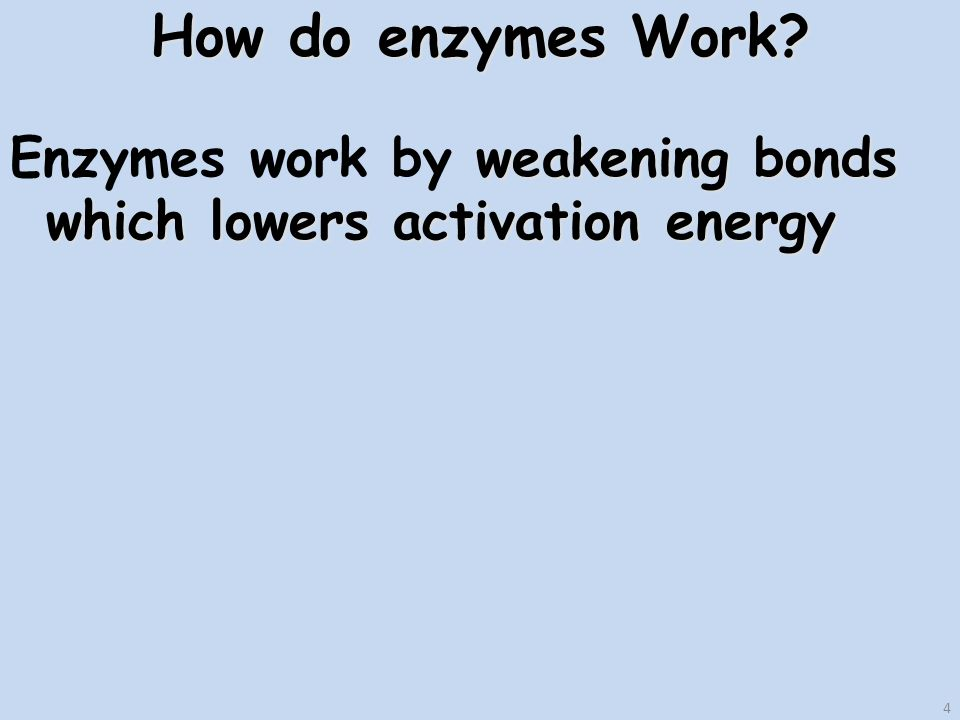 4 How do enzymes Work.
