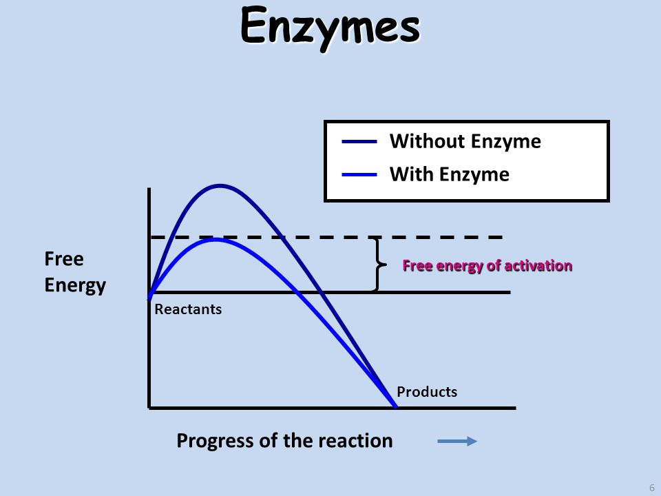 6Enzymes Free Energy Progress of the reaction Reactants Products Free energy of activation Without Enzyme With Enzyme