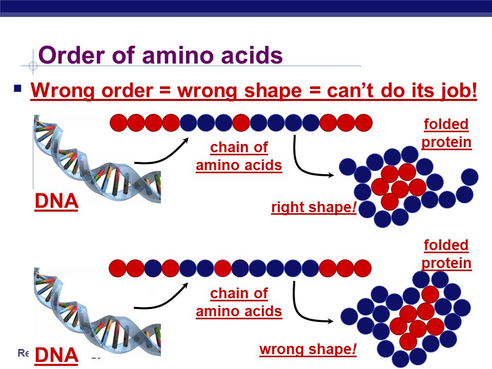 What affects enzyme action  Correct protein structure  correct order of amino acids  why.