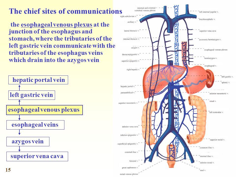 1 General Description Heart Arteries Veins The Circulatory System