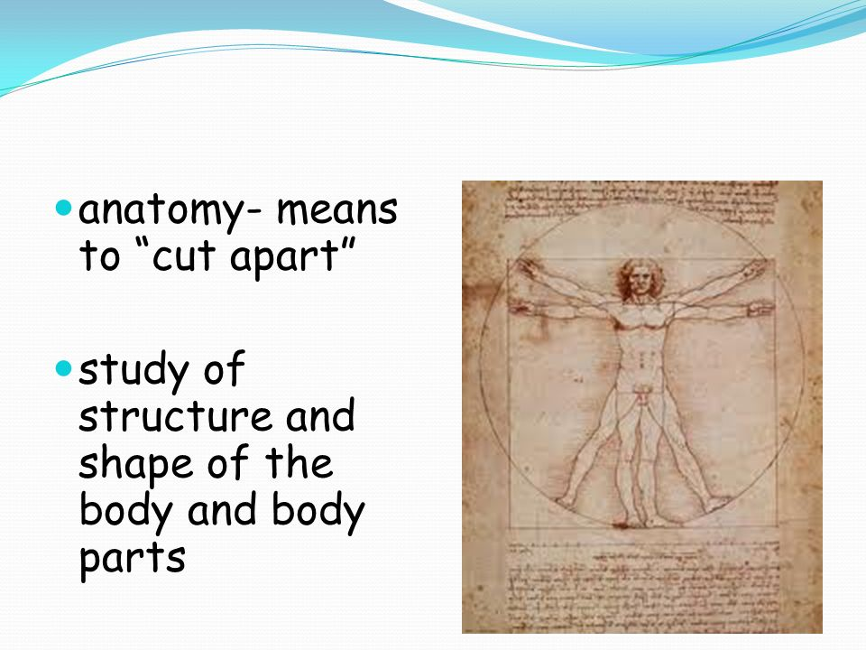 Anatomy Means To Cut Apart Study Of Structure And Shape Of The