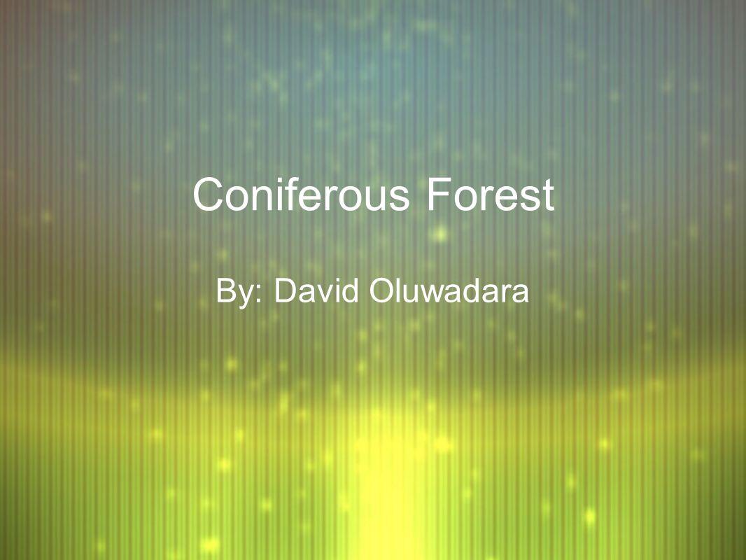 coniferous forest temperature range fahrenheit
