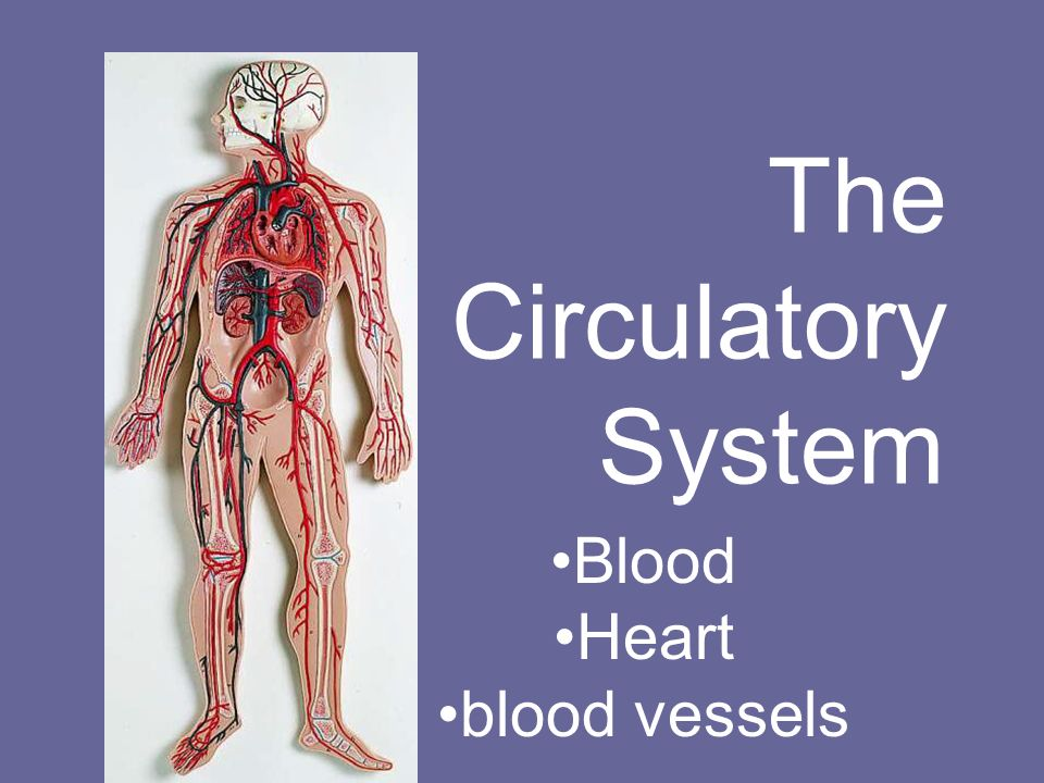 The Circulatory System Blood Heart Blood Vessels Ppt Download