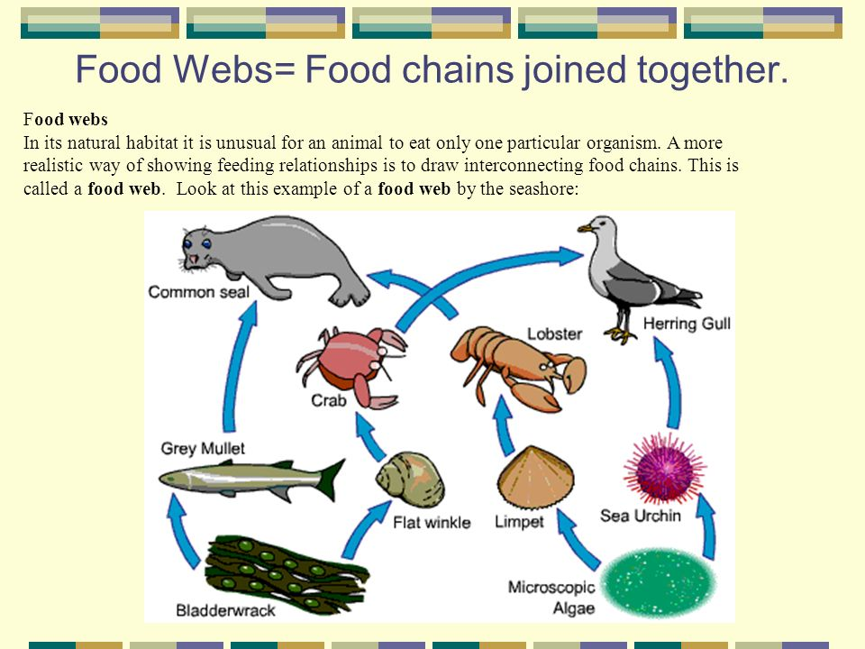 Feeding Relationships Food Chains And Webs Food Chains You Need To