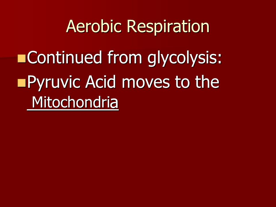 Aerobic Respiration Continued from glycolysis: Continued from glycolysis: Pyruvic Acid moves to the _________a Pyruvic Acid moves to the _________a Mitochondri