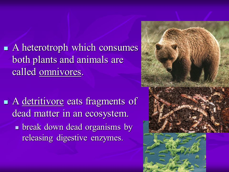 A heterotroph which consumes both plants and animals are called omnivores.