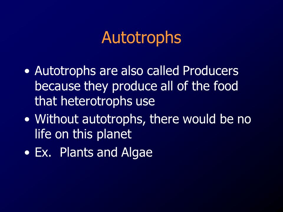 Autotrophs Autotrophs are also called Producers because they produce all of the food that heterotrophs use Without autotrophs, there would be no life on this planet Ex.